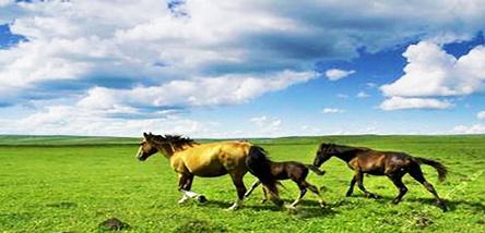重庆到内蒙古希拉穆仁大草原、银肯响沙湾双飞